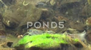 flathead catfish wallpaper.  Catfish Intended Flathead Catfish Wallpaper L