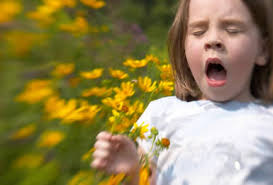 ¿Afecta el cambio climático a las alergias?