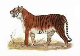 We upload a new incredible video every weekday. Bali Tigress V Dire Wolf Carnivora