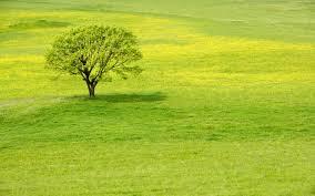grass field. 2560x1600 Wallpaper Tree, Meadow, Grass, Field, Summer, Green, Flowers, Grass Field R