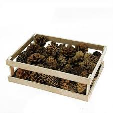 Decorative Display Boxes Union Rustic Assorted Pine Cones For Crafting Or Display In 90