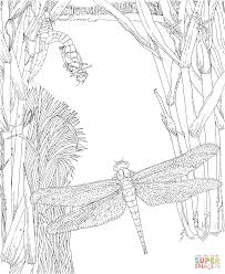 Small Picture Dragonfly Insect coloring page Free Printable Coloring Pages