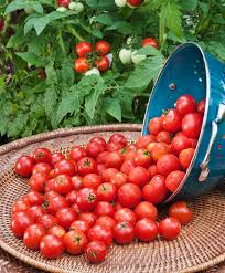 Container Garden Plans Tomatoes
