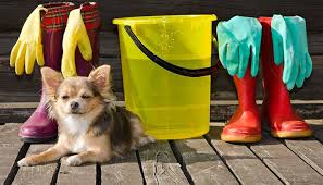 10 spring cleaning tips for dog owners