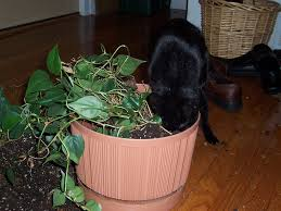 Safeguarding Plants From Cats \u2013 How To Keep Cats Out Of Houseplants