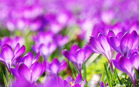 Картинки по запросу flowers
