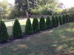 Selecting Trees For Your YardGood Trees For Backyard