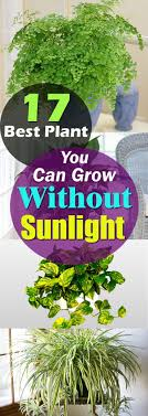 best office plant no sunlight. there are plants that grow without sunlight they need indirect exposure some even thrive best office plant no s