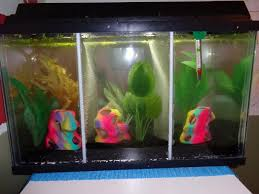 full size of male betta tanks with dividers google zoeken than bowl stupendous fish tank divider