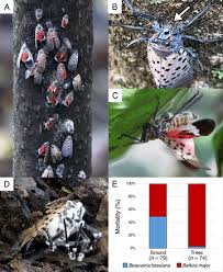 <b>A pair</b> of native fungal pathogens drives decline of a new invasive ...