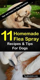 learn about these diffe recipes for homemade flea spray for dogs to help make life for