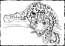 detailed coloring pages coloring pages animals printable animal coloring pages for s free detailed coloring pages