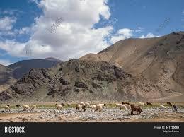 Flock Sheep Goats Image & Photo (Free Trial) | Bigstock