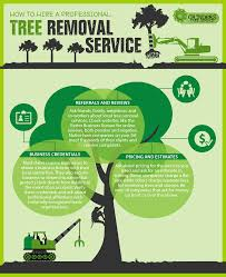 how to hire a professional tree removal service