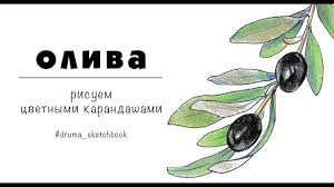 символ чего оливковая ветвь 6 главных мировых символов которыми