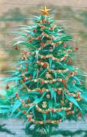 December 13 - Oh Cannenbaum! A six-foot marijuana plant decorated as a Christmas  tree ...