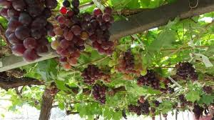 Image result for khao yai winery