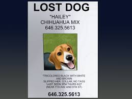 Pet Poster How To Make An Effective Missing Pet Poster With Pictures 3