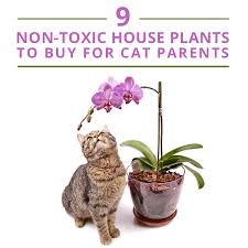 9-Non-Toxic-House-Plants-to-Buy-for-