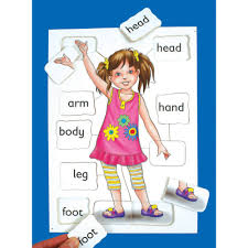 Free My Body Parts Download Free Clip Art Free Clip Art On