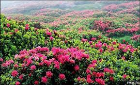 Resultado de imagen de plants with flowers