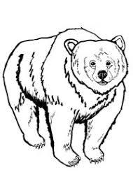 Disegni Di Orsi Da Colorare Per Bambini 24 Disegni Di Orsi Da