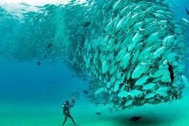 Αποτέλεσμα εικόνας για φωτο ψαριων