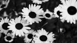 tumblr background black and white flowers. Black White Flower Backgrounds Tumblr Flowers For Background Image In And