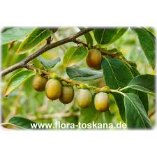Pruning Fruit Trees  Space For LifeLotus Fruit Tree