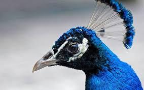 Становление гомойотермных теплокровных животных возникновение  Становление гомойотермных теплокровных животных возникновение птиц и млекопитающих