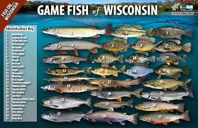 Game Fish Of Wisconsin Poster Wisconsin Dnr