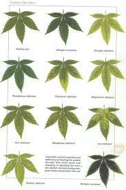 Cannabis Problem Chart Nutrient Deficiency Chart Creativedotmedia Info