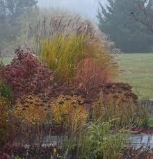 beautiful grasses in john s new jersey garden