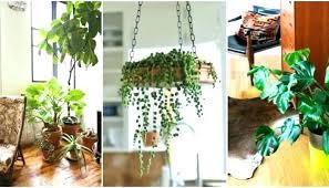 best indoor office plants. Best Light For Growing Plants Indoors  Office Indirect Low Plant Best Indoor Office Plants I