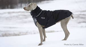 chilly dogs great white north winter coat