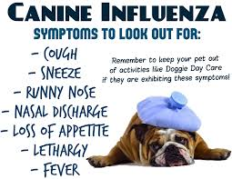 Ποια συμπτώματα είναι της γρίπης;