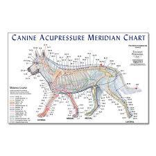 Canine Acupuncture Meridian Chart Canine Meridian Chart Animal Reiki Acupressure