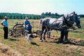 understanding the amish subculture cultural norms com traditionally the amish earn a living through farming or woodworking which they conduct out the aid of modern technology