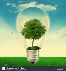 Light Bulb With Tree Inside Light Bulb With Tree Inside Stock Photo 54126826 Alamy