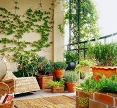 Appealing Balcony Privacy Plants 72 For Your Room Decorating Ideas with Balcony  Privacy Plants