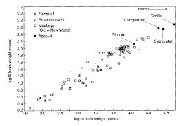 Ape Evolution Chart Linguistics 001 Communication A Biological Perspective