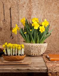 Spring Decorating Ideas Refresh Your Home With Spring Flowering Bulbs Cool Flowers Decoration For Home Ideas
