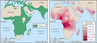 malaria com malaria and sickle cell anemia distribution of