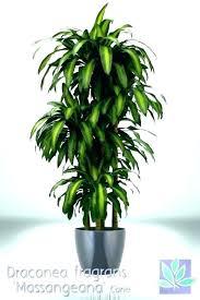 good house plants good house plants good indoor plants for low light indoor plant low light