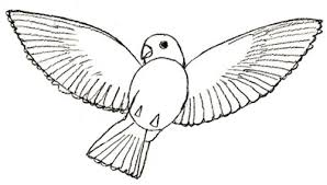 pictures of birds for drawing.  Birds Bird Drawing Step 5 On Pictures Of Birds For Drawing B