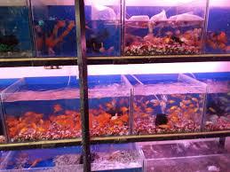 angel fish aquarium photos tilak chowk belgaum pictures images gallery justdial