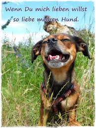 The Worlds Best Photos Of Hundefreund And Hundeliebe Flickr Hive Mind