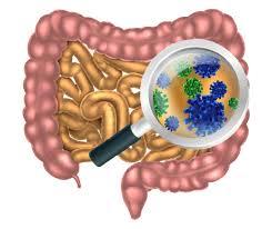 microbiota ile ilgili görsel sonucu