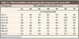 When Does Replant Corn Pay