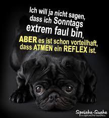 Lustige Sprüche Sonntags Extrem Faul Sein Müder Hund Sprüche Suche